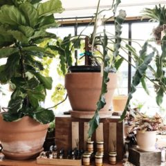 Add A Touch Of Color To Your Home With These Pet-Friendly Houseplants