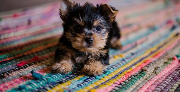 Celebrate National Puppy Day With These Fun Puppy Facts