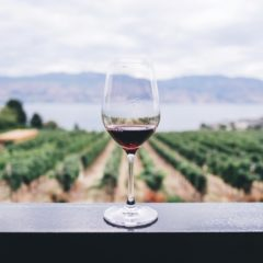 Scientists Are Studying The Effects Of Wine After One Year Of Space Travel